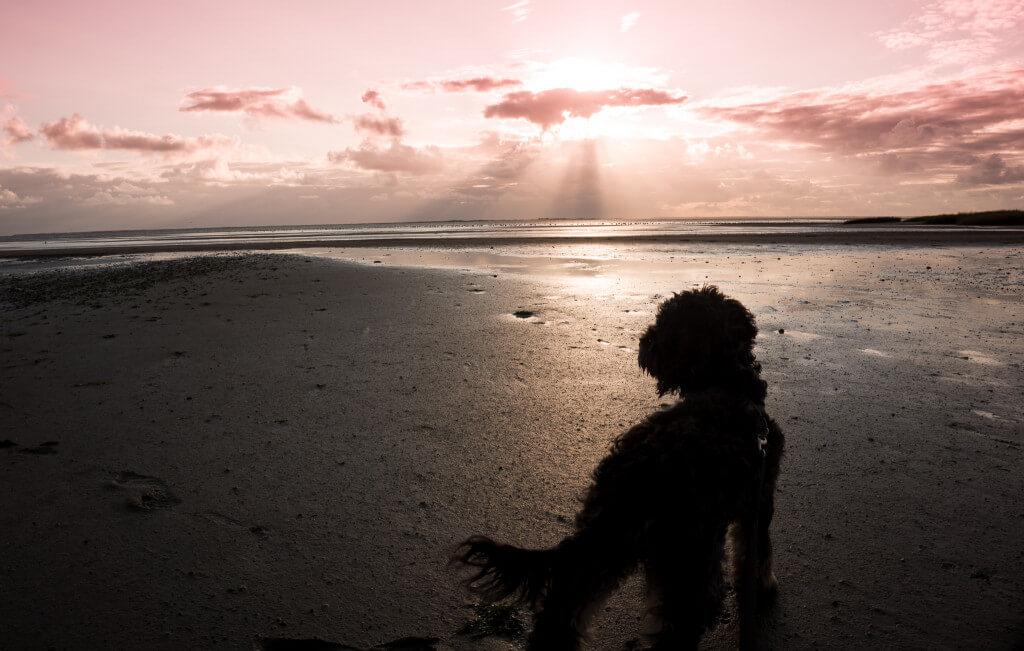 Abendstimmung: Hund am Strand in Dänemark